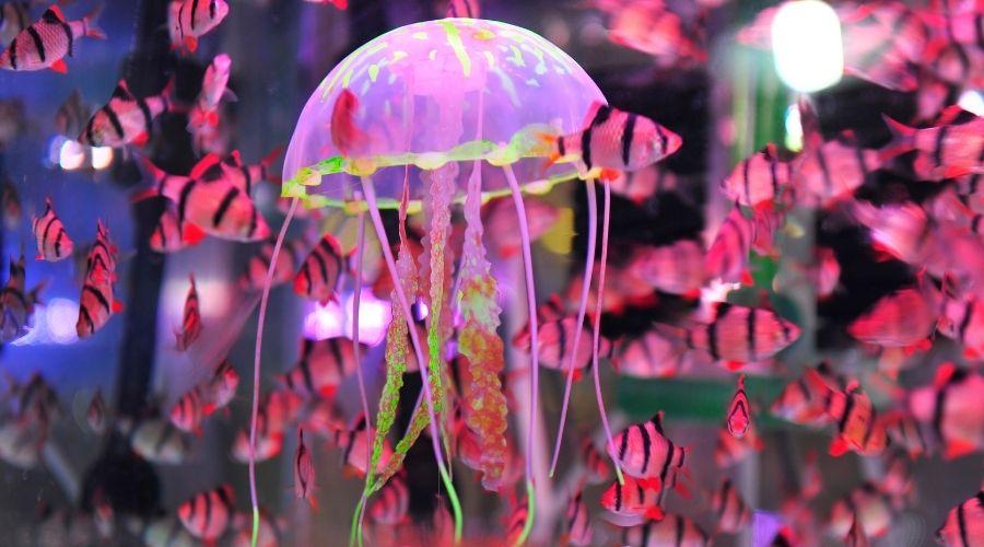 consumo de medusas-estudio-ileana-ortega-pollenzo-funindes-1