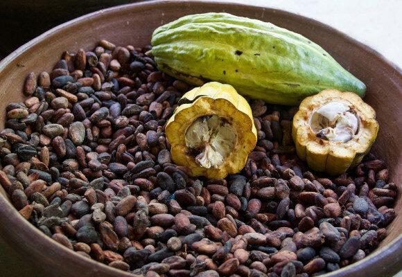 Diplomado cacao fruto _ Funindes